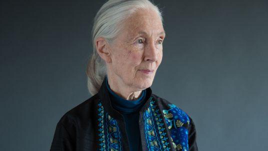 Jane Goodall : ''Il y a deux Jane. Il y a l'icône, et il y a ...
