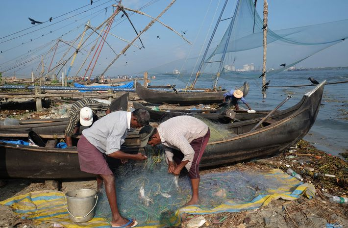 Fishermen in Kochi (also known as Cochin) in Kerala sort their catch.