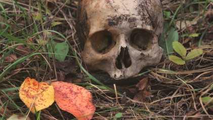Le cannibalisme était une pratique courante chez l'Homo antecessor
