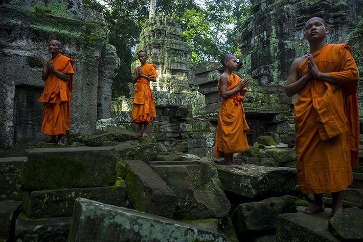 Des moines bouddhistes dans le temple Ta Prohm, au sein du complexe d'Angkor, au Cambodge.
