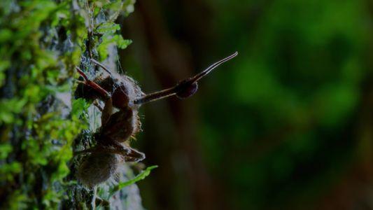 Ce parasite zombie est capable de contrôler l'esprit des insectes qu'il infecte