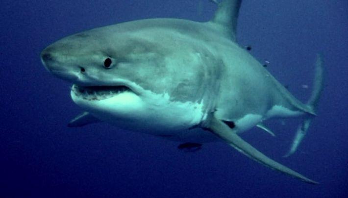 L'attaque du requin
