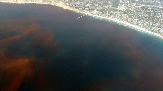 Marée rouge au large de la jetée de l'Institut d'océanographie Scripps à La Jolla en Californie, ...