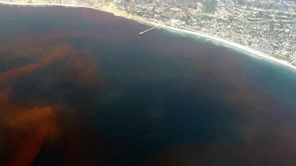Floride : une marée rouge décime la faune aquatique