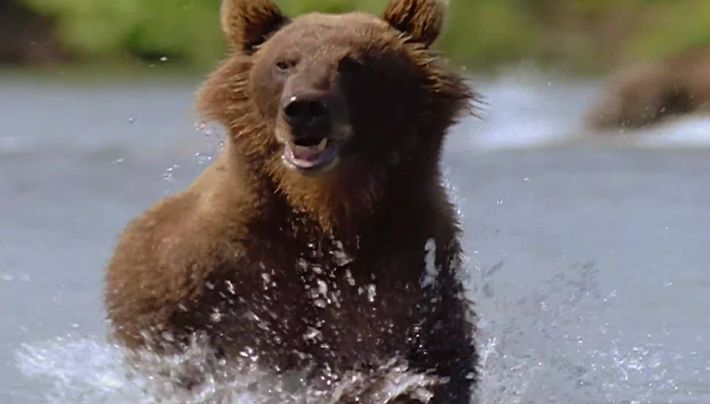 Le pays aux 10000 grizzlis