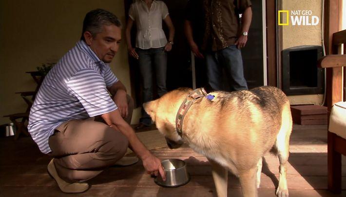 Les conduites agressives liées à la norriture chez les chiens
