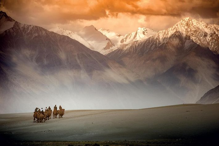 Des chameliers contemporains traversent la vallée de la Nubra, en Inde, le long d'une route reliant ...