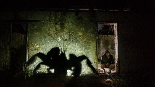 C'est à Aldabra, dans l'ouest de l'océan Indien, que se trouve la dernière population saine de ...