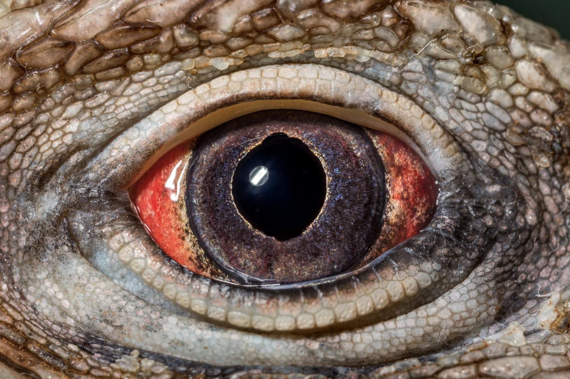 Comment la nature a inventé l'œil