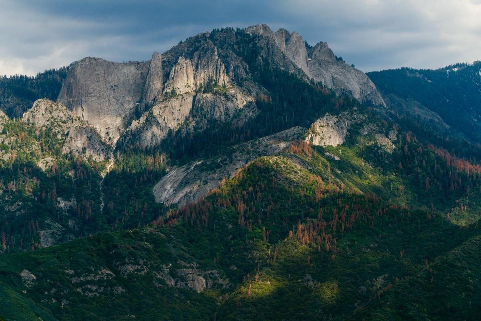 Sequoia Park et son parc adjacent, Kings Canyon, englobent une vaste gamme d'élévations et d'habitats, s'étendant ...