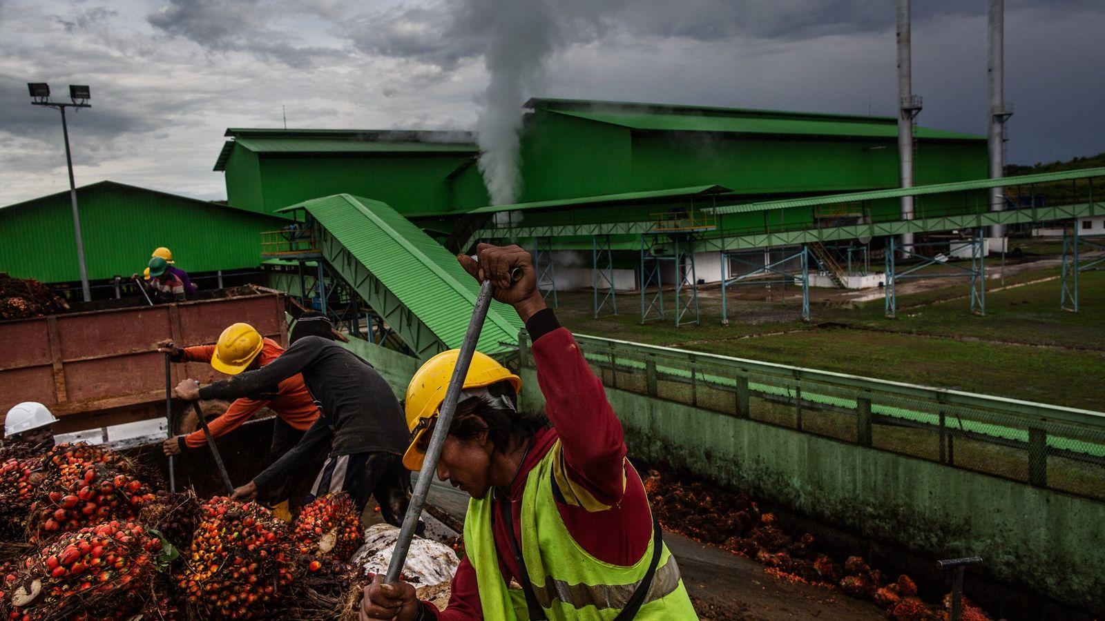 Dans l'ouest du Gabon, le géant agro-industriel singapourien Olam a ouvert deux nouvelles plantations de palmier ...