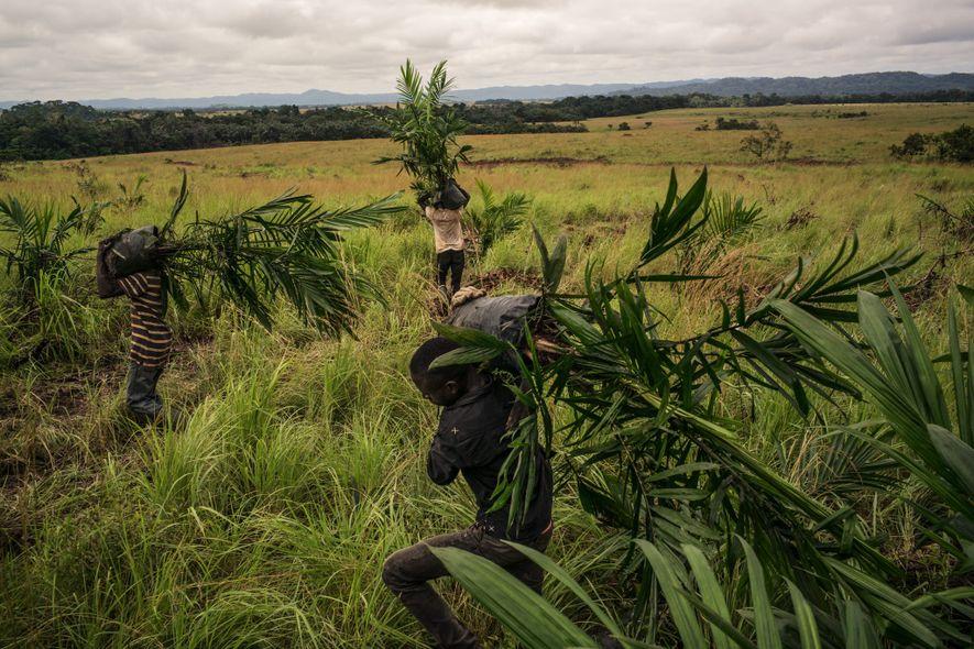 Comment produire de l'huile de palme sans détruire les forêts ?
