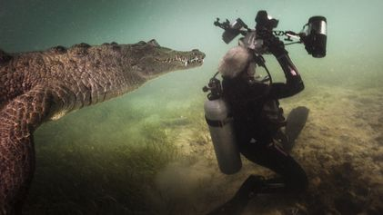 Que feriez-vous si vous vous retrouviez nez à nez avec un crocodile ?