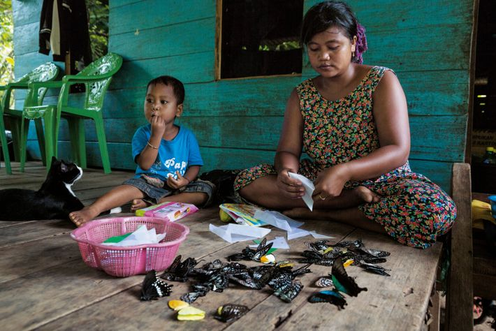 Sur l'île indonésienne des Célèbes, une jeune mère classe ses prises. La chasse aux papillons est ...