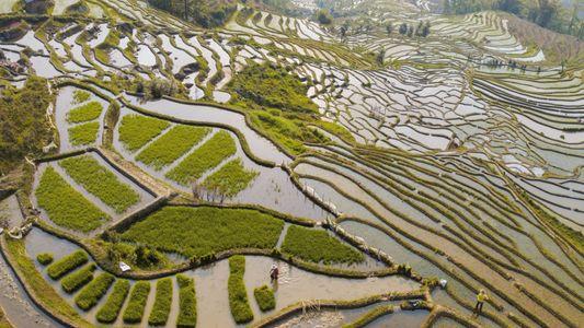 La science vient en aide aux agriculteurs chinois