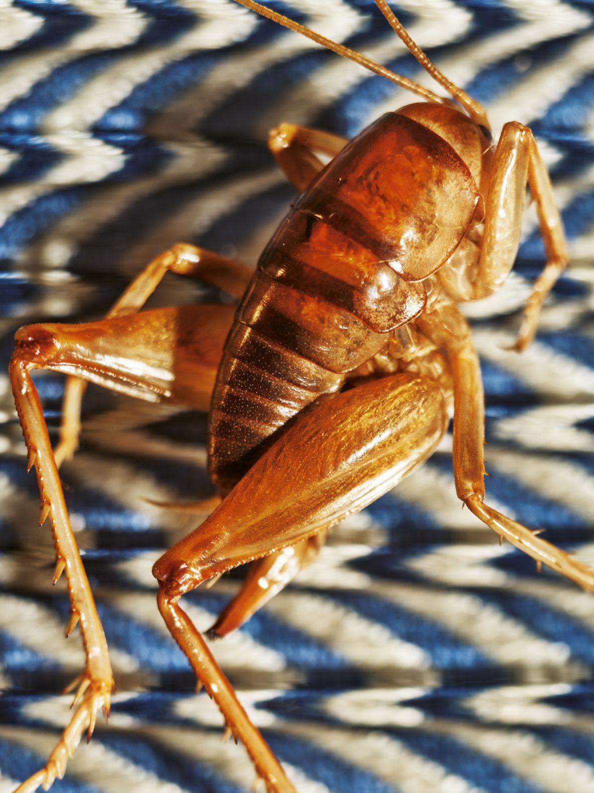 Si on vous parle de manger des insectes, vous imaginez une brochette de cafards ? Pensez ...