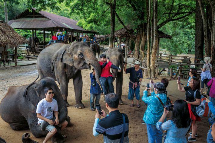 Des touristes posent avec des éléphants, auparc Maetaman Elephant Adventure, près de Chiang Mai (Thaïlande).