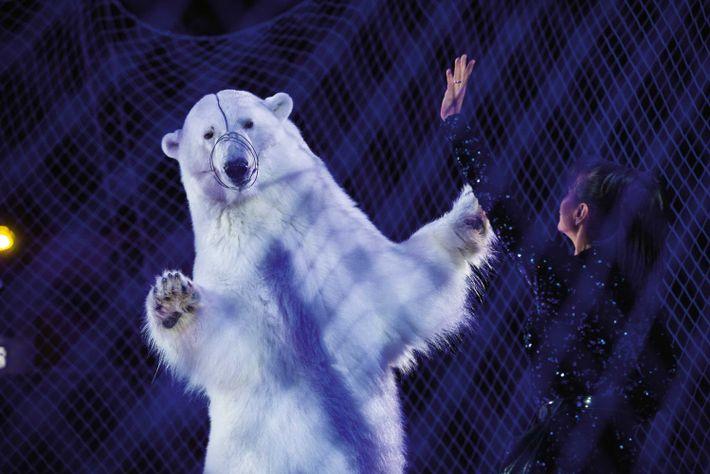 Derrière un grillage, un ours blanc danse sur laglace, lors d'un show à Kazan (Russie).