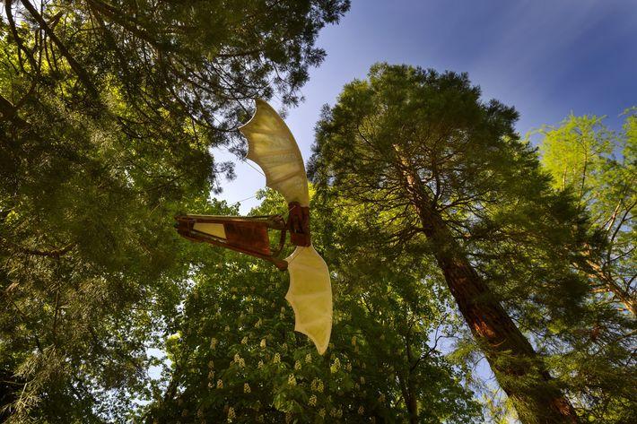 Un ornithoptère dans le parc du château du Clos Lucé.