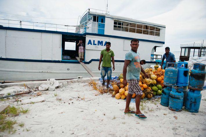 Sur la plage de Meedhoo, des noix de coco sont chargées sur un bateau qui les ...