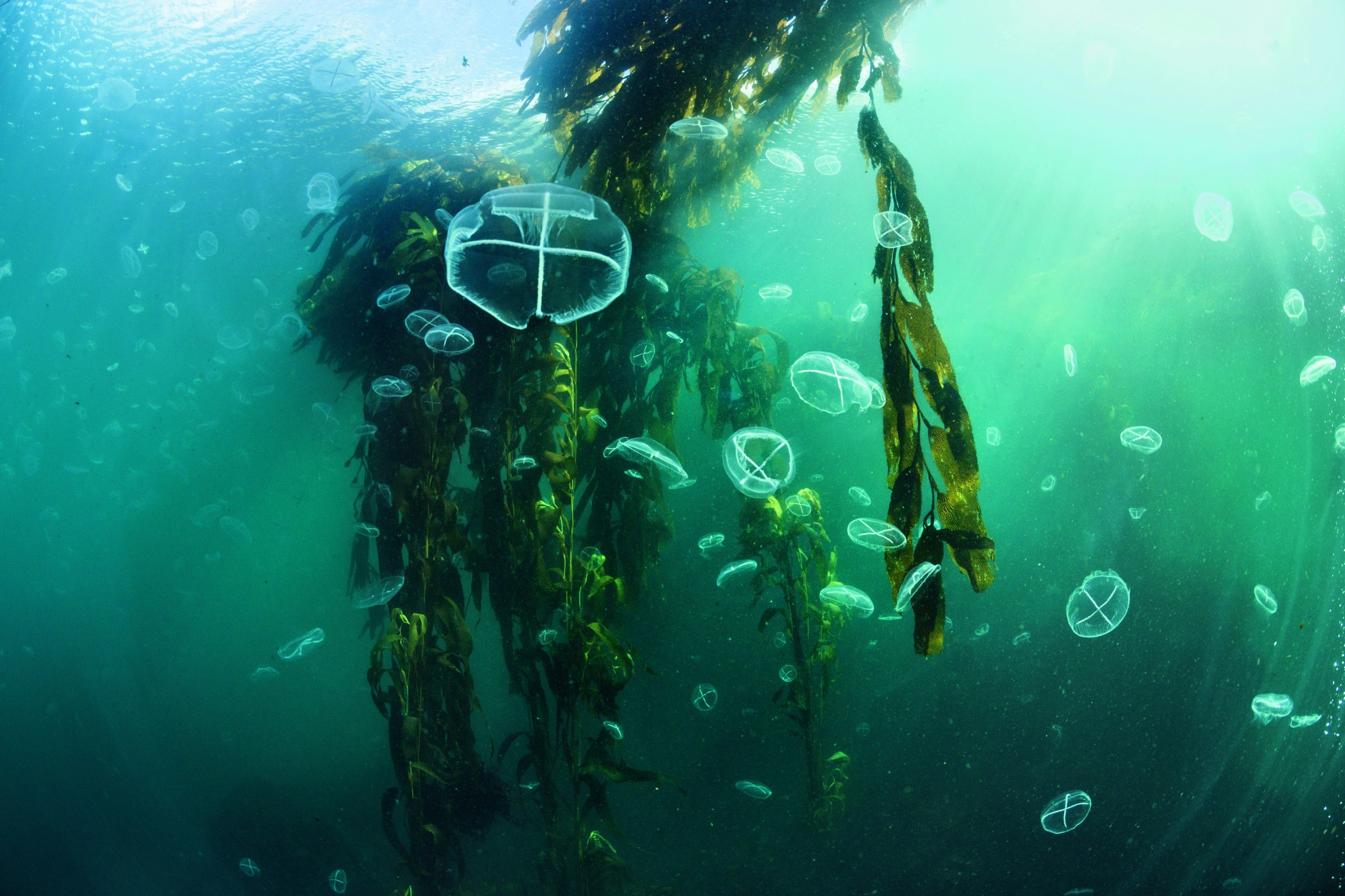 Thétis, la mer au bout du monde | National Geographic