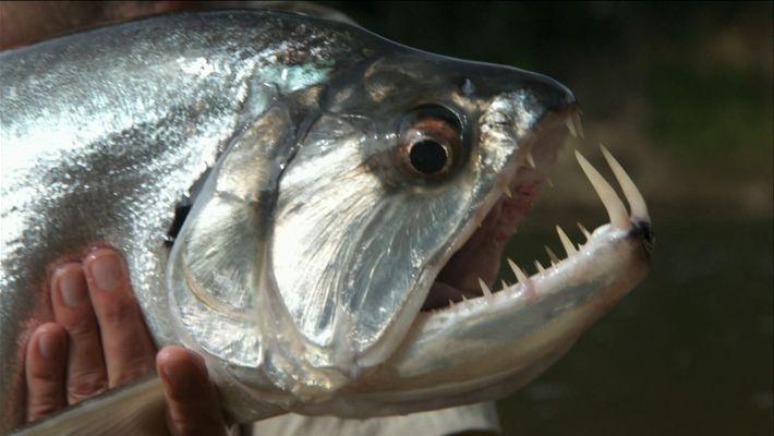 Griffes de poissons