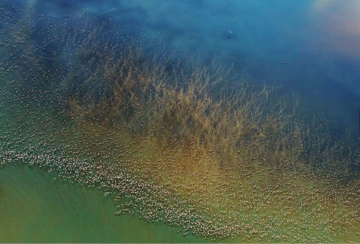 CATÉGORIE NATURE - Des milliers de flamants roses prennent leur envol près du lac de Natron ...
