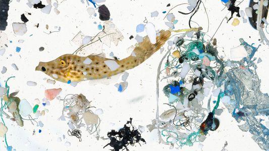 Microplastiques : un impact encore largement méconnu