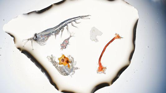Microplastiques, mégaproblèmes...