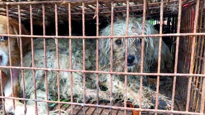 Malgré l'interdiction, le festival de Yulin continue de vendre de la viande de chien.