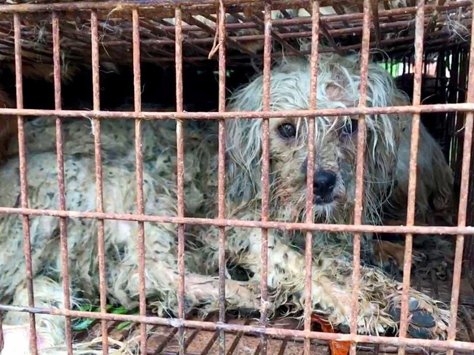 Malgré l'interdiction, la viande de chien est toujours en vente au festival de Yulin