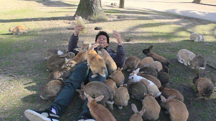 Ōkunoshima, l'île aux lapins