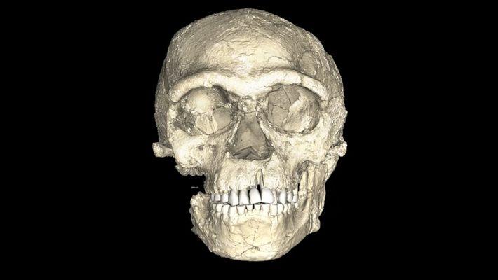 Ces fossiles seraient les plus vieux restes humains jamais découverts