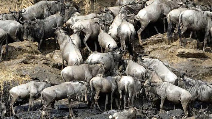 Comment 908 kilos de viande en décomposition aident le parc de Serengeti