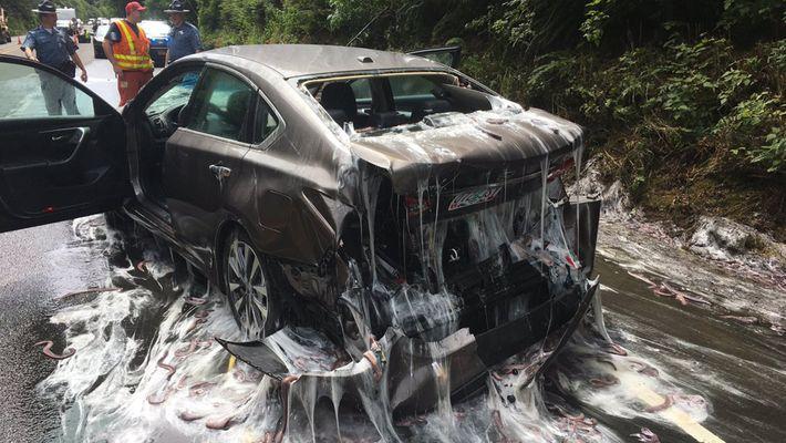 Vidéo : des myxines inondent de mucus une autoroute de l'Oregon.