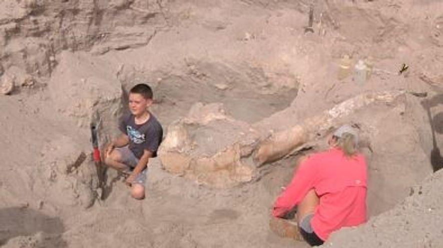 Un enfant a découvert un fossile vieux d'un million d'années lors d'une randonnée