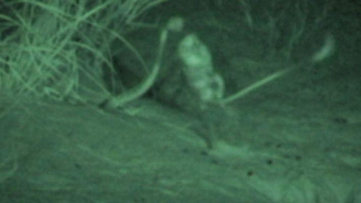 À voir : Un rat échappe à l'attaque d'un serpent en 100 millisecondes