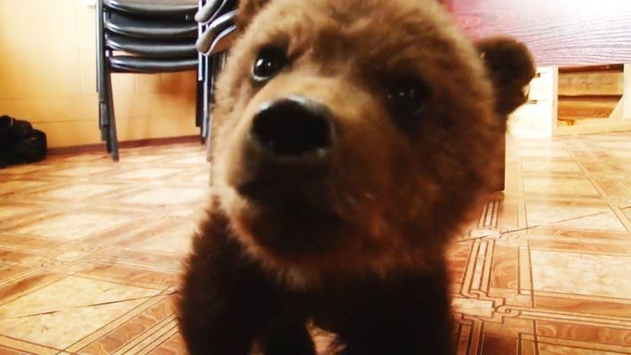 Sauvetage d'un ourson en Russie