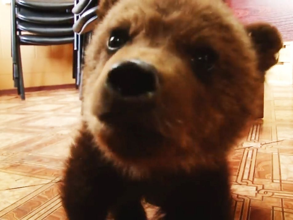 Cet ourson orphelin a trouvé un foyer d'adoption