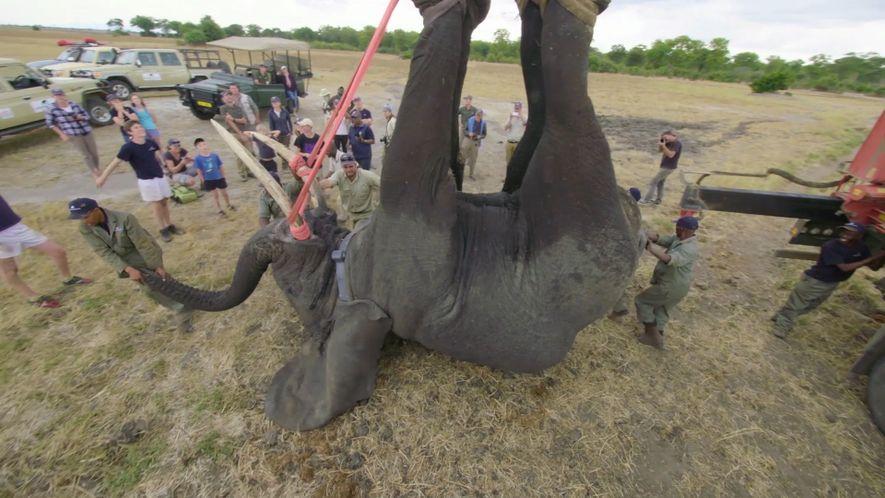 Comment déplacer 500 éléphants ?