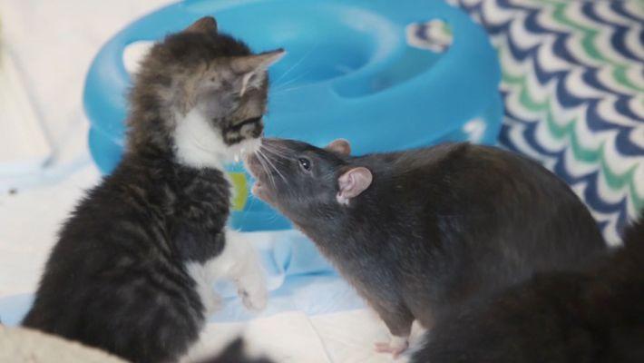 Ces chats ont des compagnons improbables
