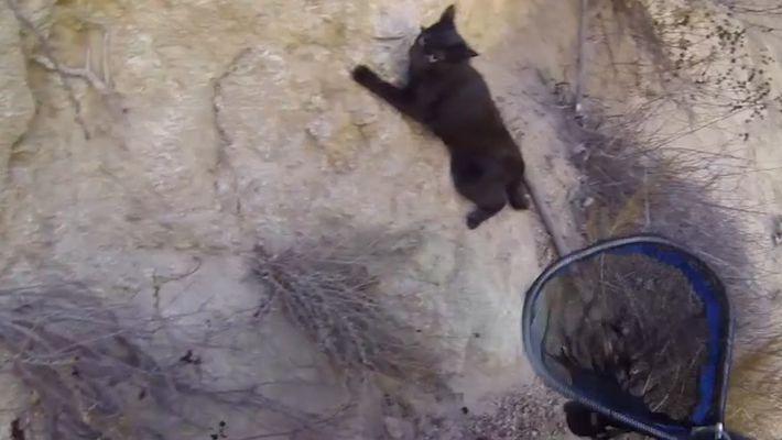 Sauvetage d'un petit chat à Cliffside Park