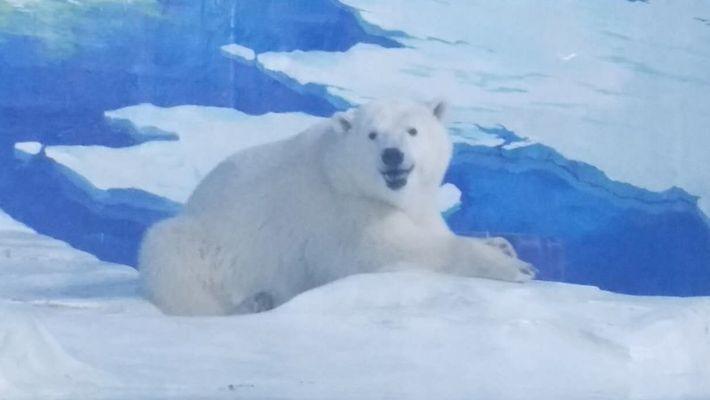 L'ours le plus triste du monde a retrouvé sa mère