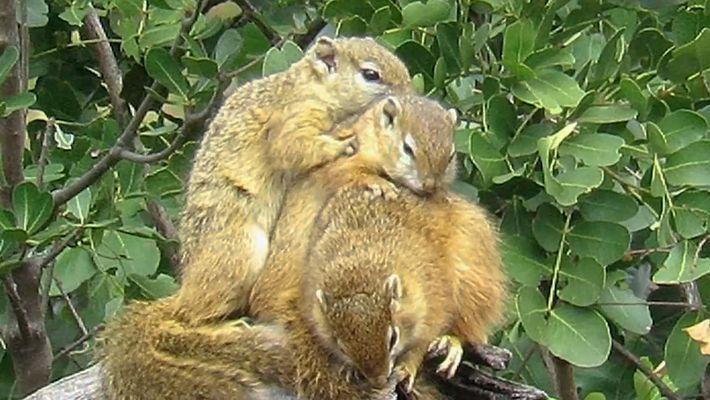 Comment font les écureuils pour se tenir chaud ?