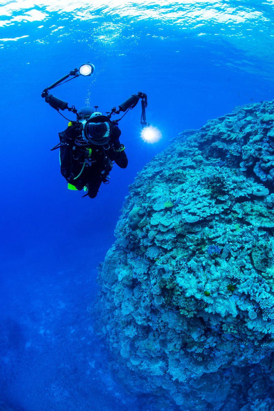 Photographier le nautile dans son milieu naturel est une idée qui trottait depuis longtemps dans la ...