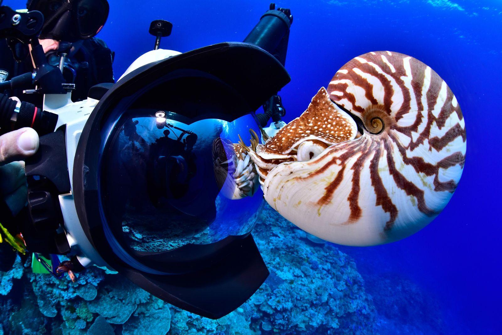 Il arrive que le nautile ne rejoigne pas les profondeurs de l'océan, à la fin de ...