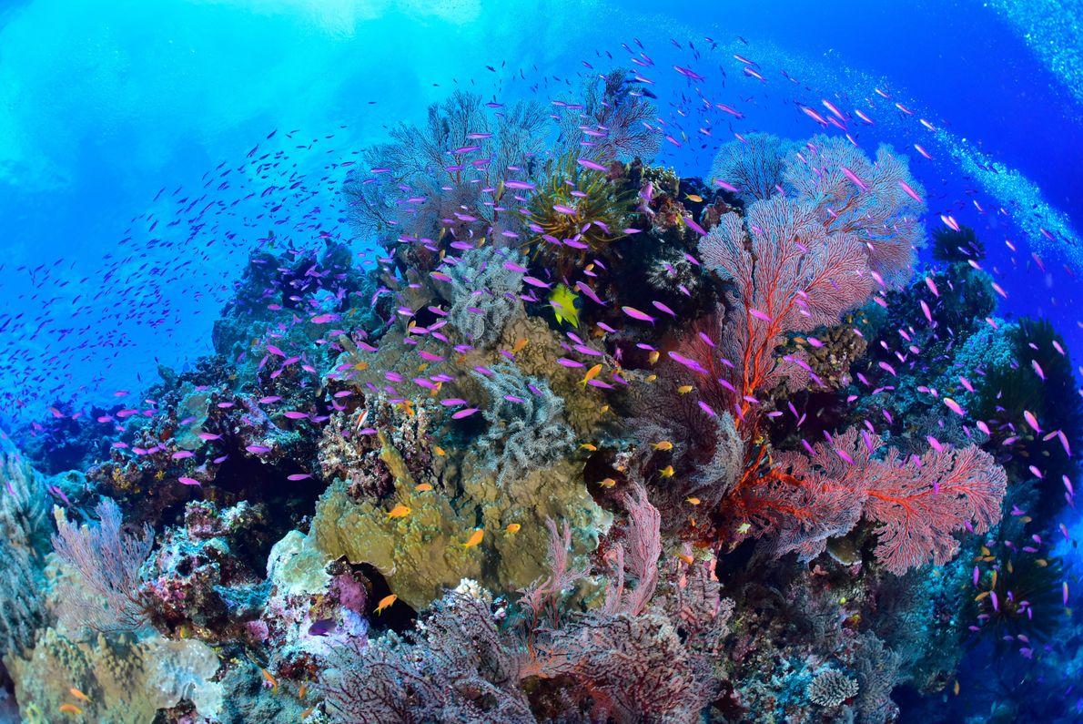 La Nouvelle-Calédonie possède le plus grand lagon du monde, et son territoire maritime total s'étend sur ...