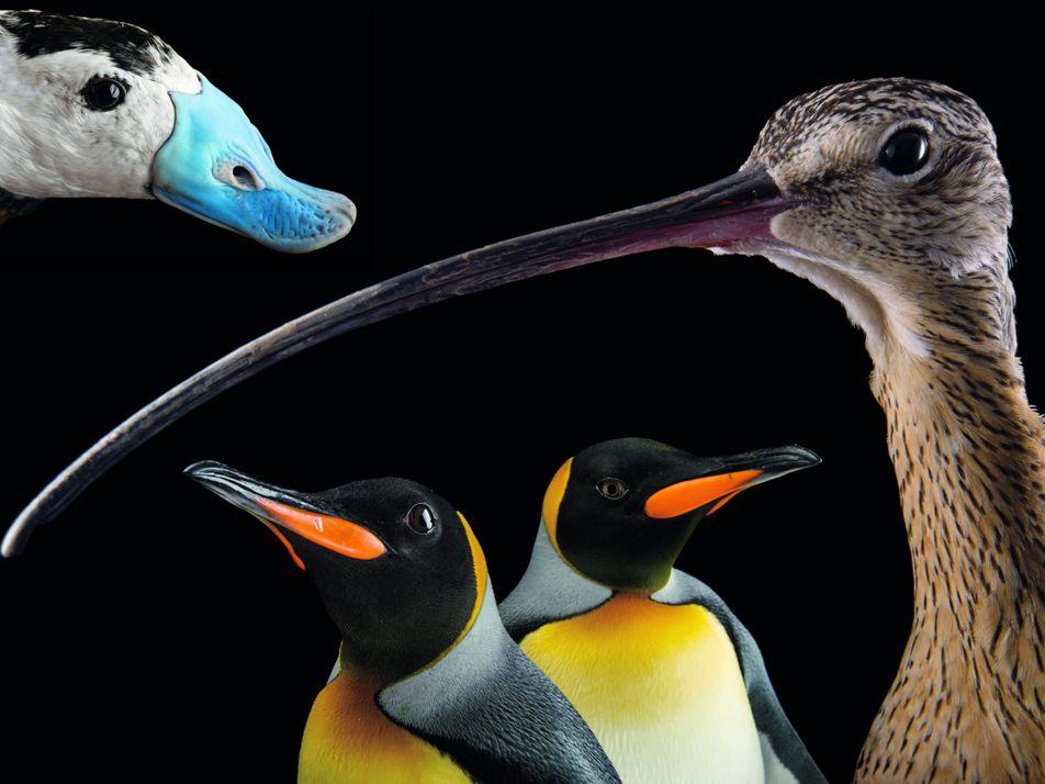 Pourquoi les oiseaux sont indispensables à notre survie