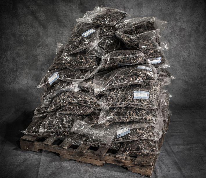 L'une des six caisses remplies de sacs d'hippocampes desséchés.