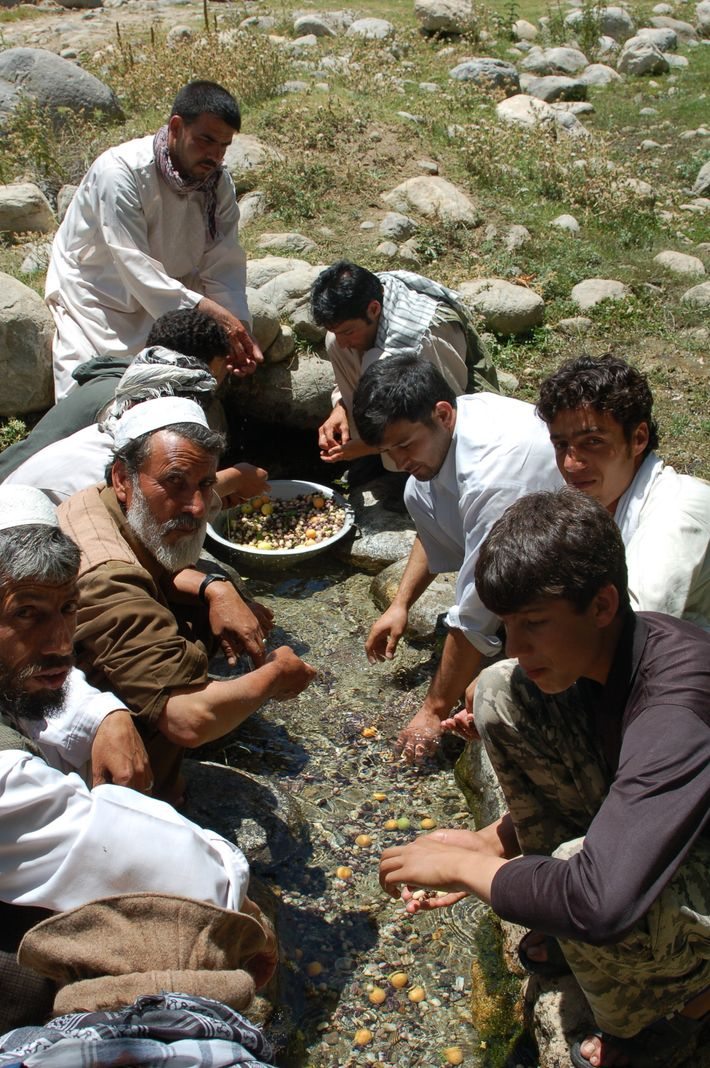 Dégustation de mûres blanches et d'abricots dans une rivière des montagnes afghanes à Fakharsha.